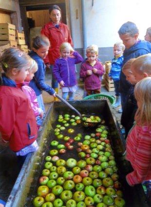 »Apfelprojekt« des Kindergartens »Kleine Wolke«