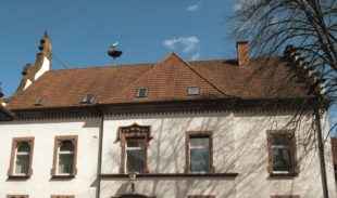 Nest wird auf dem Rathaus installiert