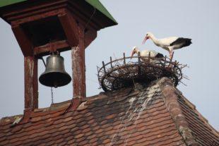 Morgen wird das erste Zeller Storchenfest gefeiert