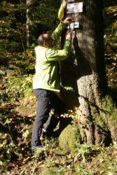 Schwarzwaldverein hält Wege und Wegweiser in Schuss