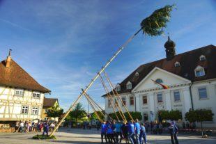 Maibaumstellen in Biberach