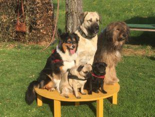 Diese Vierbeiner können viel mehr als »Sitz, Platz, Fuß«!