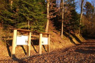 Ruhewald »Bildtann«: Die letzte  Ruhestätte in der Natur des Waldes