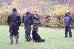 Bei der Herbstprüfung des HSV Biberach-Zell war Teamgeist gefragt