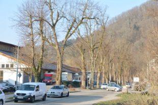 Baum-Allee am Stadteingang steht auf dem Prüfstand