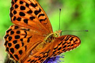Ausstellung: »Schmetterlinge brauchen unseren Schutz«