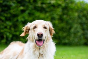 Großer Mitmachtag auf dem Hundeplatz am Erlenbach