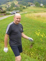 Jakobskreuzkraut auch in Nordrach auf dem Vormarsch