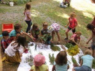 Beim Kindersommer wurde das Geheimnis der Kräuterbüschel erkundet