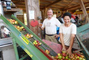 Tolles Apfeljahr trotz Dürre
