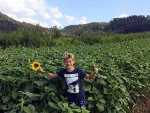 Sonnenblumenverkauf für die ZFV-Nachwuchsförderung