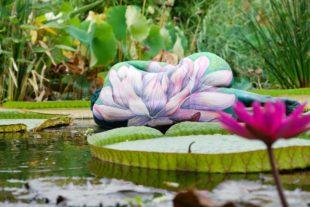 Zellerin wird zum Seerosen-Kunstwerk