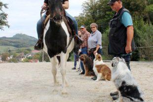 Wie Pferd und Hund Freunde werden