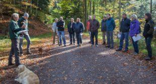 Gemeindewald vor ungewisser Zukunft