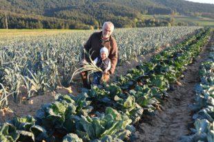 Gute Gemüseernte trotz Trockenheit