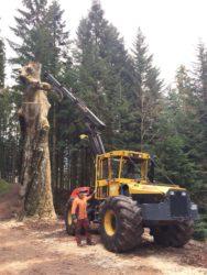 Spektakuläre Großbaumfällung im Oberharmersbacher Wald
