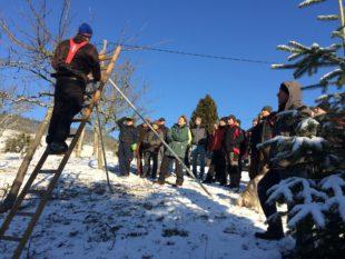 Obstbaumschnitt und -pflege in Theorie und Praxis