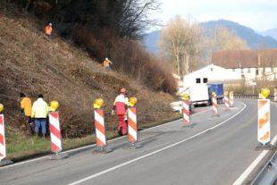 Wegen Baumfällarbeiten ab Montag Vollsperrung der Landstraße