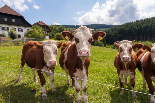 Projekt »Dorfurlaub« in Zell-Unterharmersbach: Auftaktveranstaltung