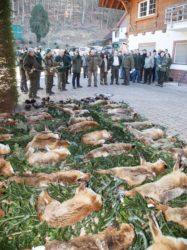 Halali für den Fuchs