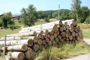 Nachhaltige Waldnutzung steht durch Klimawandel auf dem Prüfstand