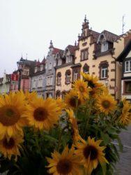 Sonnenblumenverkauf für  ZFV-Nachwuchsförderung