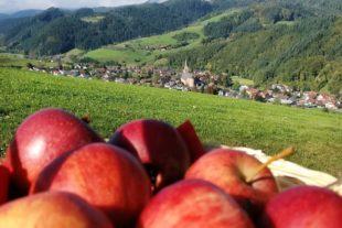Oberharmersbach steht im Zeichen des Apfels