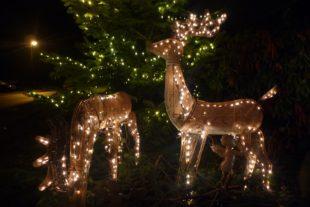 Stimmungsvoller Weihnachtszauber im Obertal