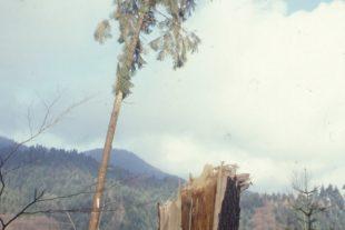 War Orkantief »Lothar« nur ein Vorbote kommender Katastrophen?