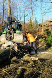 Kataster registriert 1.300 Bäume