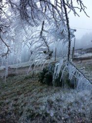 Väterchen Frost und die Nordracher Rosenhecke