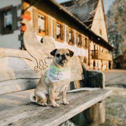 Mops Emma als Botschafterin für den Mittleren Schwarzwald unterwegs