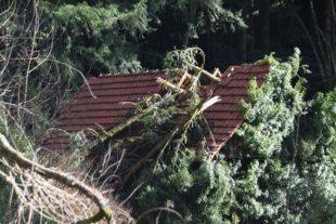 Baum zerstörte Dachstuhl von einem der Schanzbachhäuser