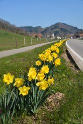 Tausendfaches Gelb, Glocken klanglos im Wind, Grün grüßt! - Renate Oswald