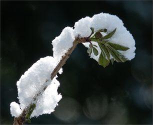 Winter- Impressionen im Frühling