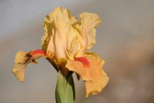 Exklusive Schönheiten und robuste Allrounder im heimischen Garten