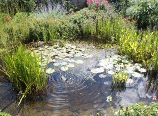 Regenwasser bestmöglich nutzen und Kräuterbeete anlegen: