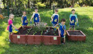 Kinder pflanzen Gemüse-Setzlinge