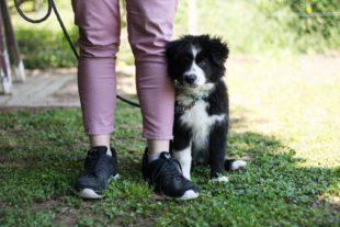 Hundesportverein nimmt Training in kleinen Gruppen wieder auf