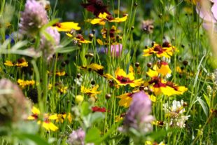 Unterharmersbach sagt vielen Dank für die Blumen