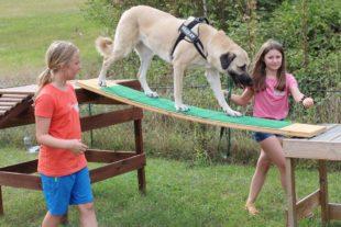 »Hundstage« begeistern Kinder beim Zelli-Ferienprogramm
