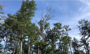 Wald leidet unter der Trockenheit und bringt weniger Erträge