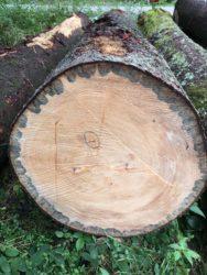 Würdigung eines alten Baumes
