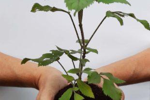 Morgen wird der Klimawald gepflanzt