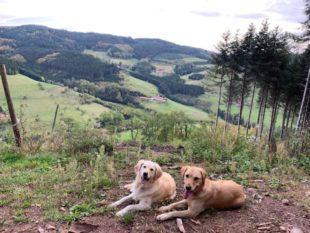Auf langen Spaziergängen entdecken Emmi und Gina den Herbst