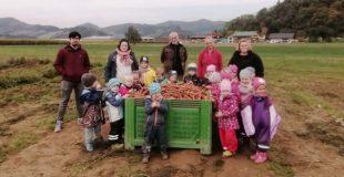 Kindergarten Wirbelwind hilft beim Karotten-Ernten auf dem Biohof Reber