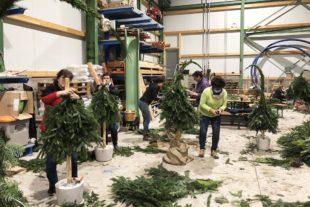 Auch in Corona-Zeiten: Neue Weihnachtsaktionen in Nordrach