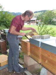 Die Bienen kennen ihre Imker