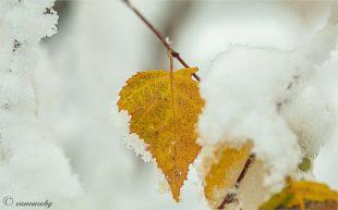 Der Winter hat auf den Höhen des Harmersbachtals Einzug gehalten