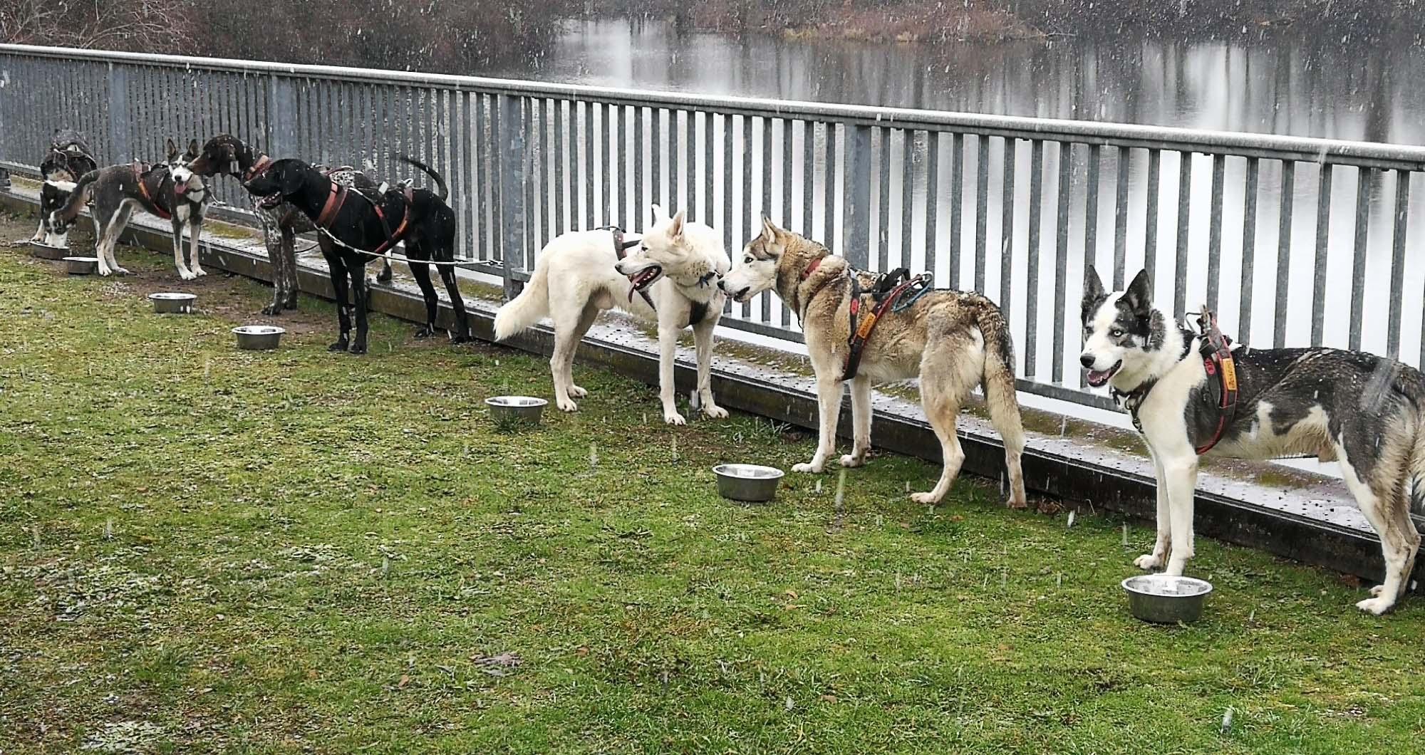 2021-1-29-Kinzigtal-Hansjörg Wörner-Hundeschlitten-IMG_20201231_104501